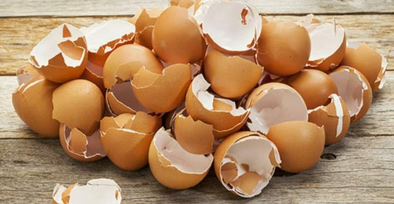 egg shells clogging garbage disposal