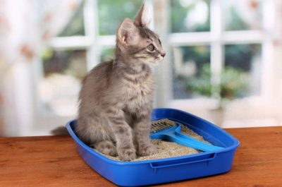 cat litter being kept away from the drain